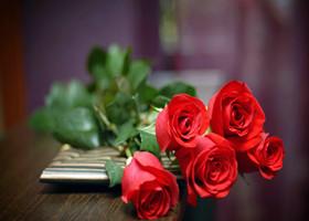 玫瑰的花语和传说